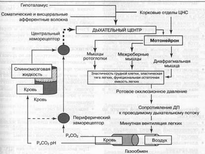 патогенез ночного апноэ