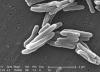 Экспертным советом FDA впервые за 40 лет было одобрено инновационное лекарство против туберкулеза